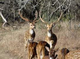 Rio 10 Kerrville >> [SOLD] Y O Ranchlands/Camino Real   Meek Ranch Sales